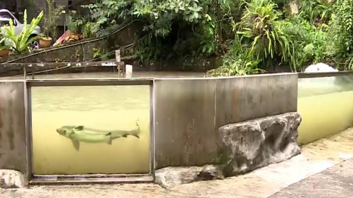 避免颱風來襲再度重創!養殖業者啟動護魚SOP