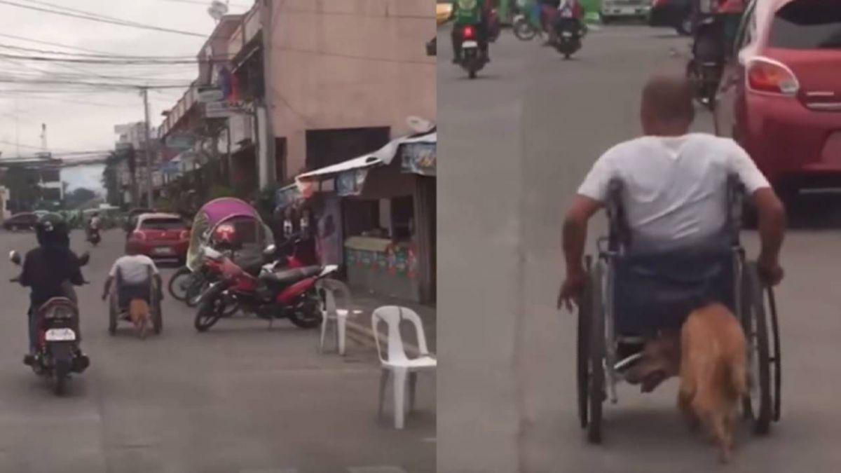 超感動!男遇車禍半身不遂 忠犬用鼻頭「幫推輪椅」