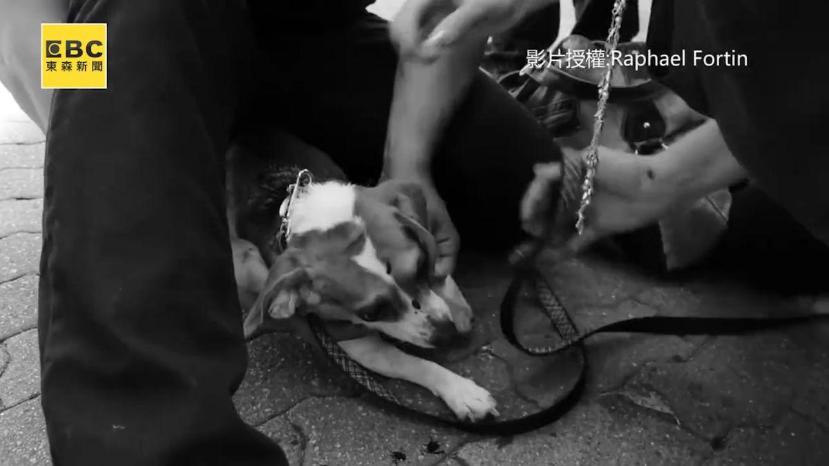 現場直擊!女主人救愛犬 搏鬥牛頭犬濺血