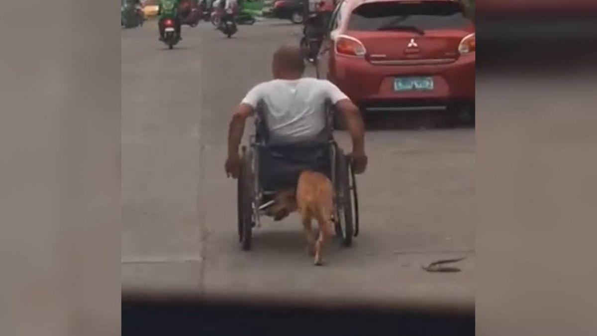 主人遇車禍半身不遂 小黃狗「用鼻頭推輪椅」 暖哭眾人