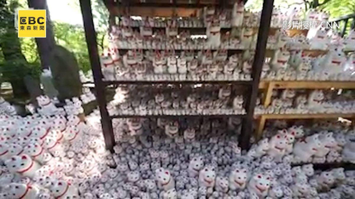 貓奴必去!充滿千隻招財貓的東京豪德寺 網呼:快融化了