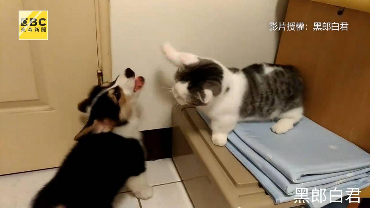 貓掌連擊V.S基腿氣功大對決 全撲空網笑:不要再打了啦!
