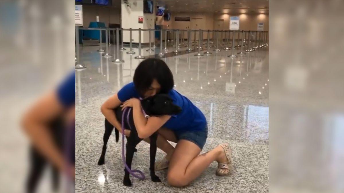 台灣小黑狗移民加拿大! 中途媽最後緊擁 含淚送牠出發