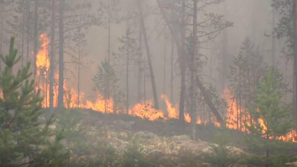 瑞典熱浪釀大火…求助歐盟 法士兵伸援手急救援