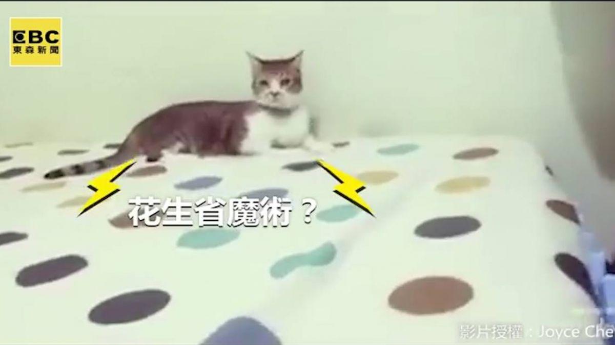 大膽小貓挑釁大貓 結局讓人笑翻啦!