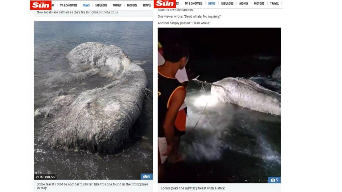 2個月出現2隻!菲國漁民驚見「海怪」:憂大地震發生