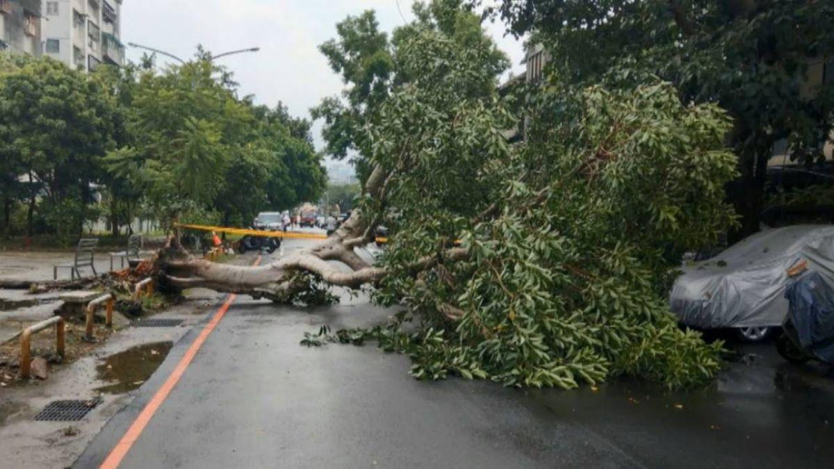 【獨家】超衰!買新車才數月…停路邊40年大樹突連根拔起倒砸壞