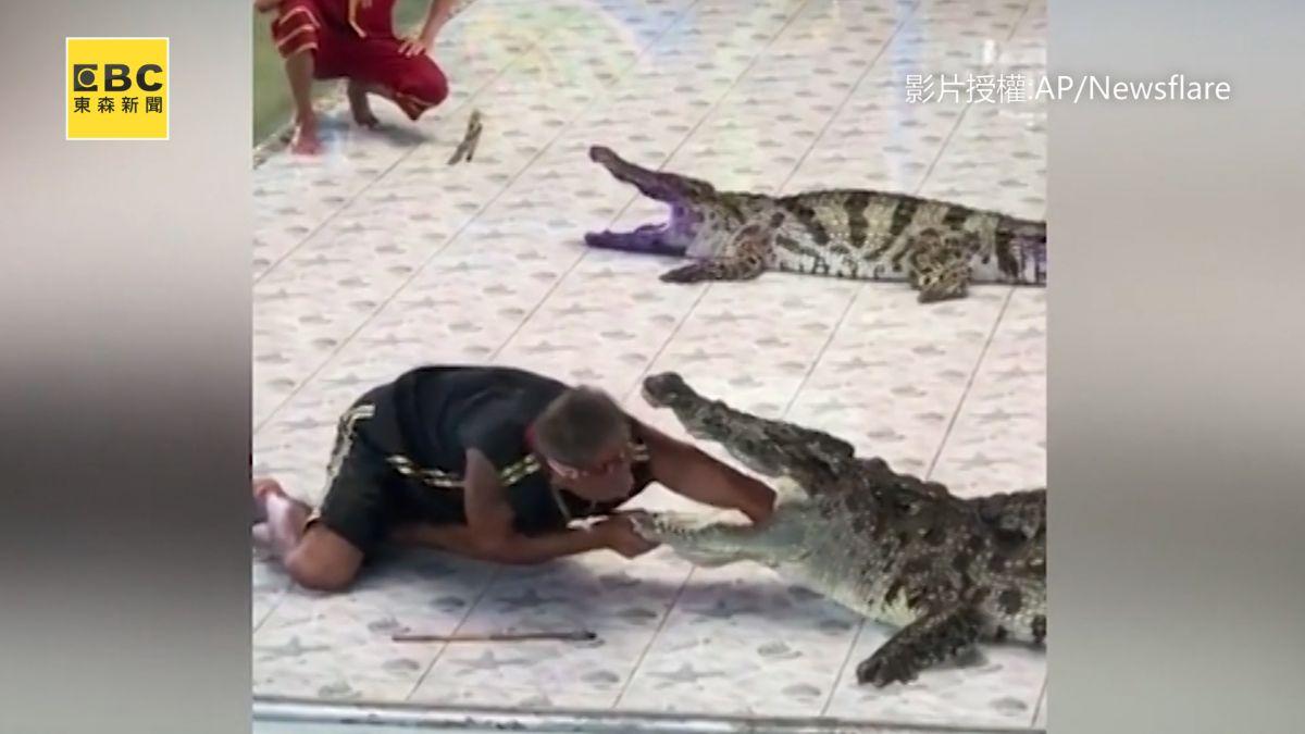 手伸太裡面!鱷魚發狂狠咬 現場百人同時嚇傻
