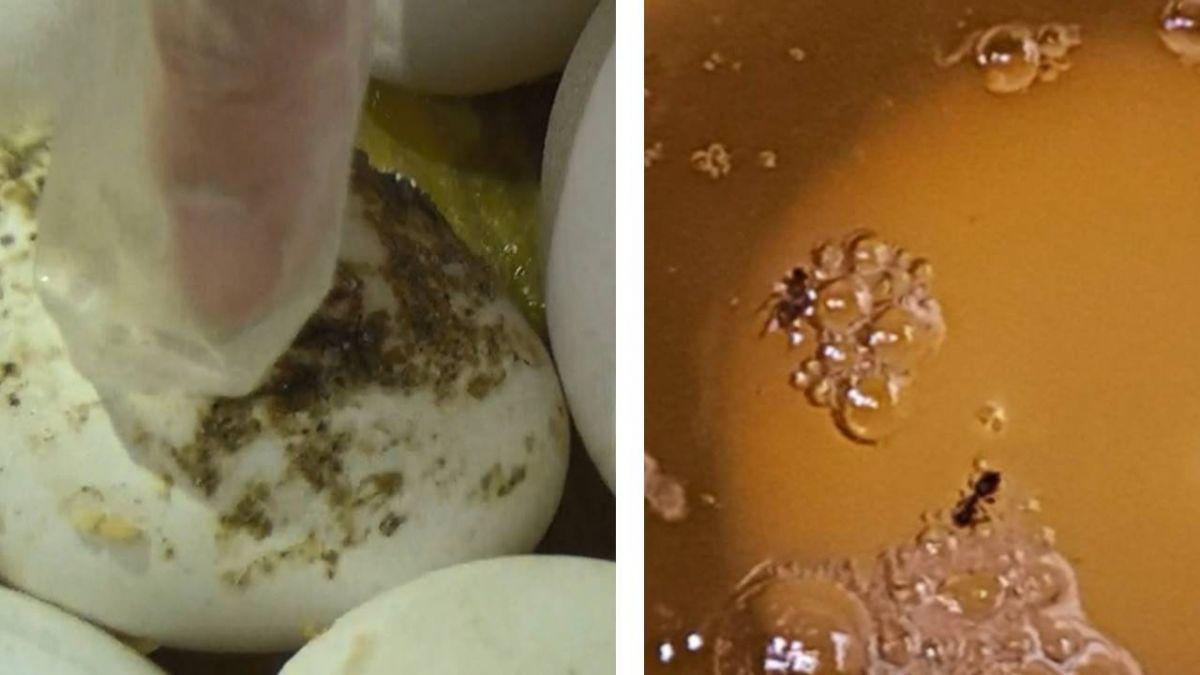 「元山」劣蛋液月銷1萬3200公斤 只回收563公斤