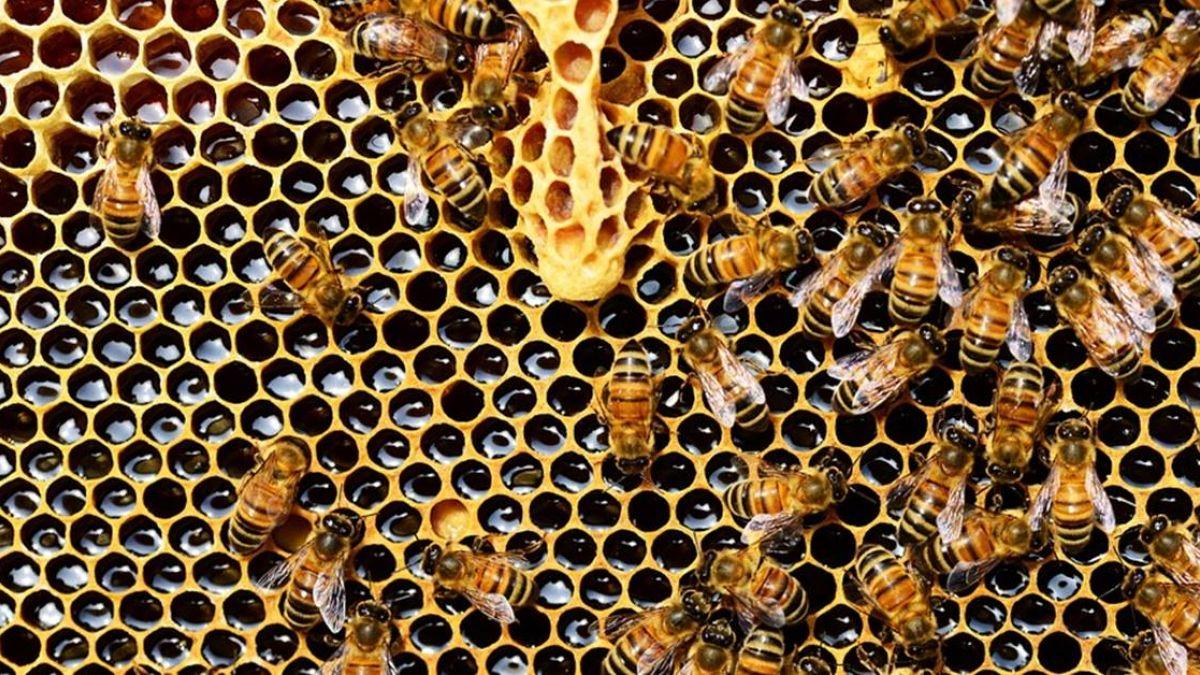 危及蜜蜂存亡 加國漸禁2款類尼古丁農藥