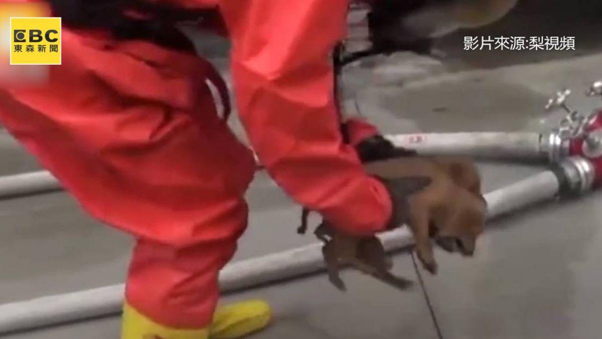 氨氣外洩...小奶狗受困! 消防員衝現場勇救2毛孩