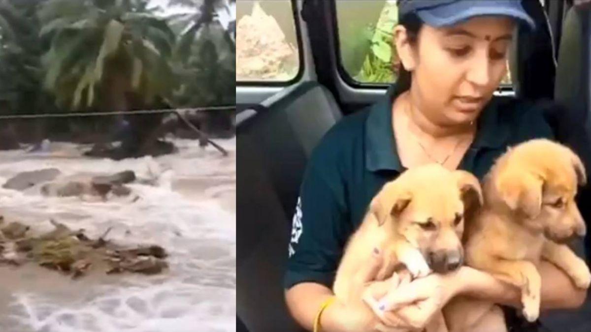 不忍丟下25隻愛犬 印度婦女拒絕撤離淹水住家