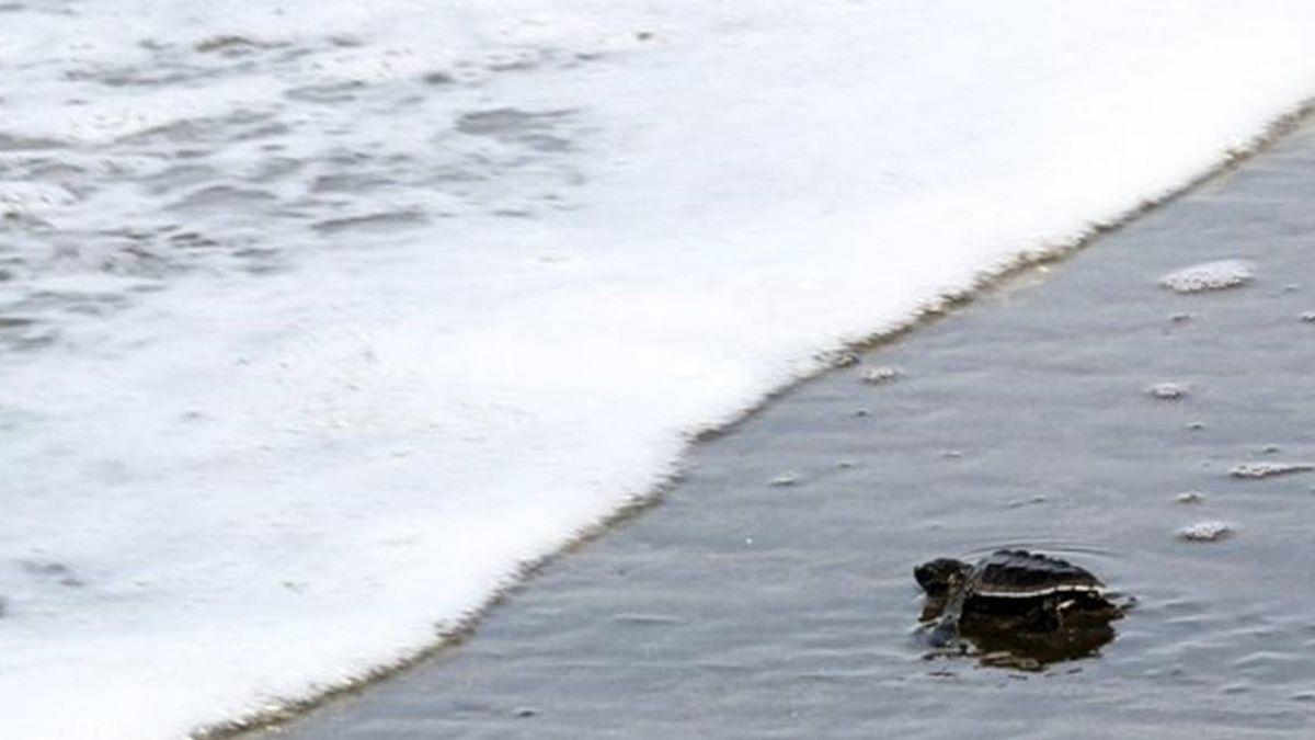 逾百隻海龜命喪墨保護區 當局調查死因