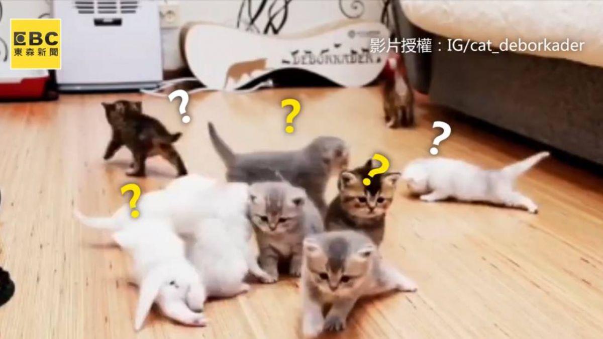 幫奶貓們拍全家福 鏟屎官崩潰:不可能的任務