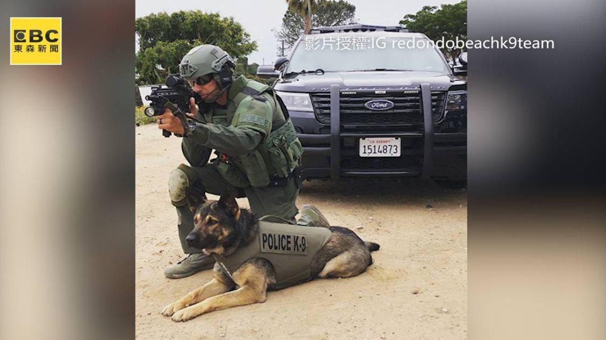 「我可沒時間玩遊戲!」 超敬業警犬 趣味訓練曝光