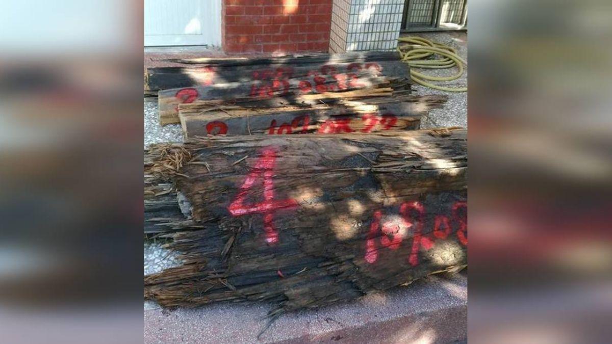 竊運珍貴贓木遭逮 山老鼠辯稱清除倒樹