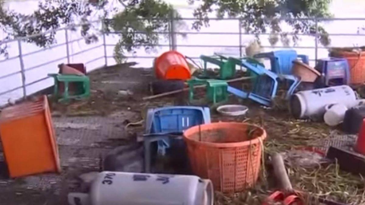嘉義布袋慘淹! 網紅釣蝦場泰國蝦1夜流光