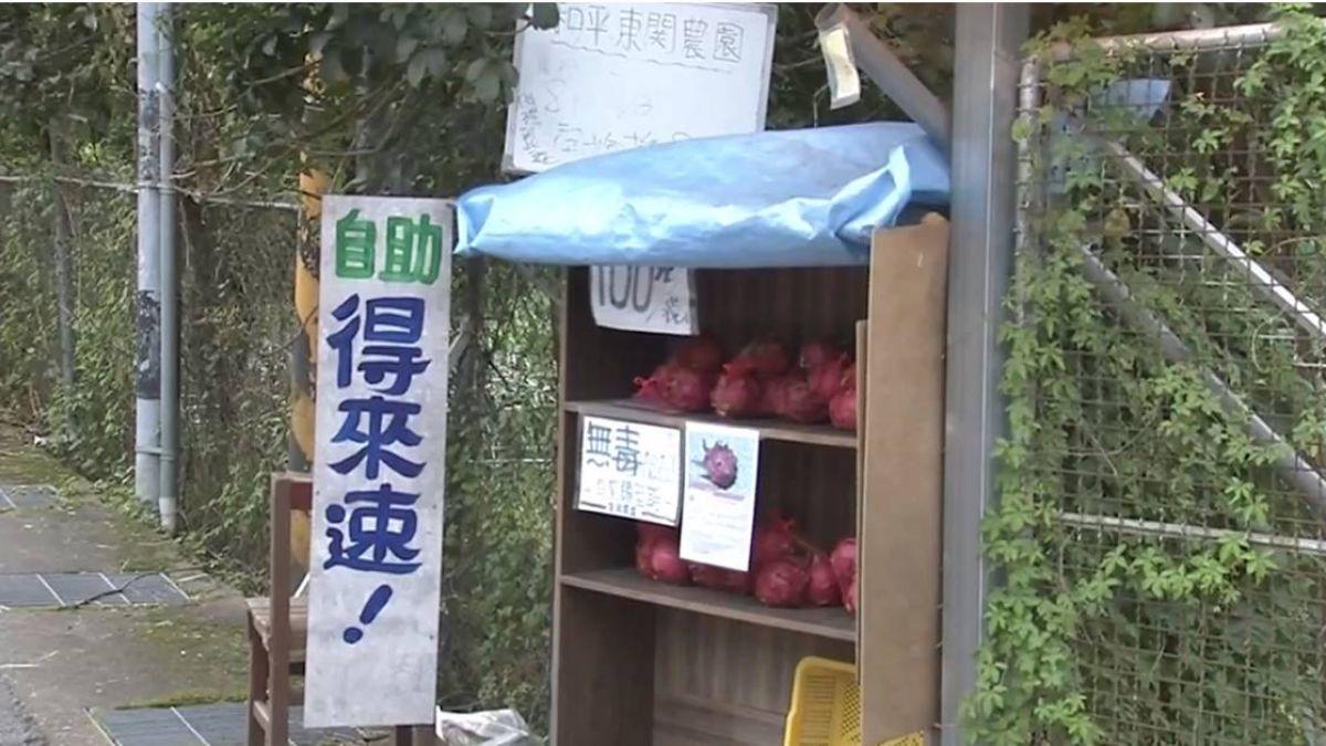 火龍果也得來速!無人攤位 客取水果自投錢