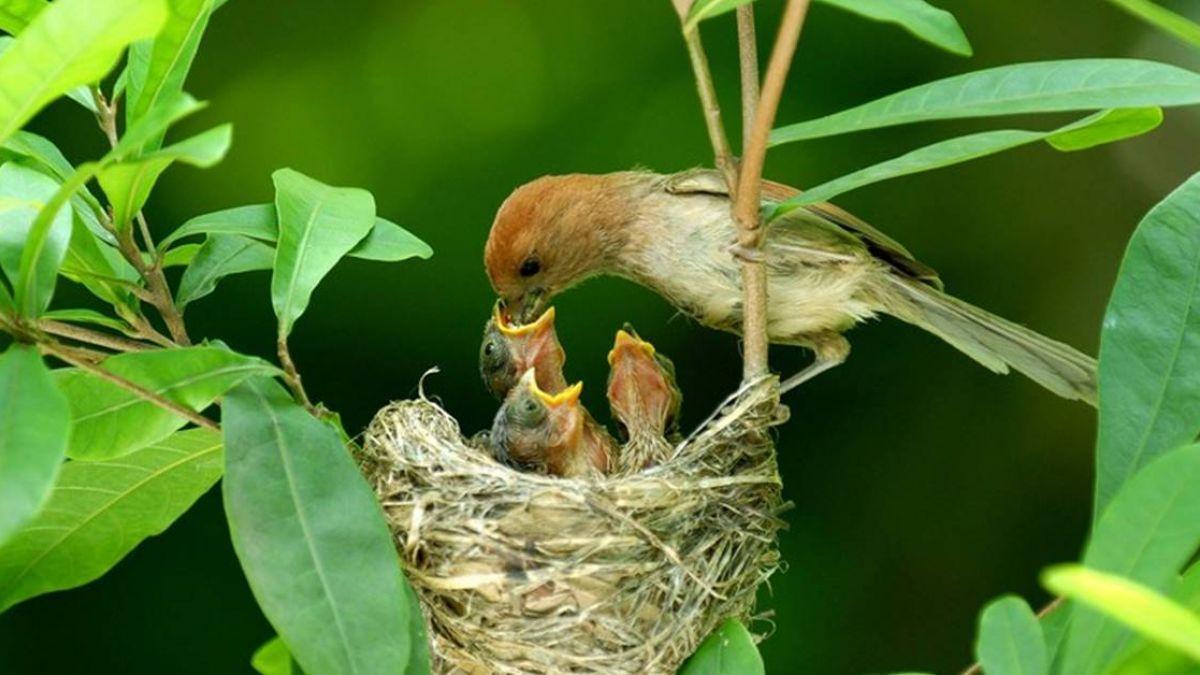 調查追蹤鳥類趨勢  麻雀和粉紅鸚嘴減少
