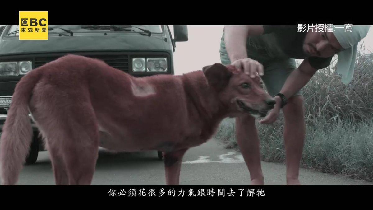 浪浪遭萬惡捕獸夾折磨 受害  他:許多狗因此被截肢