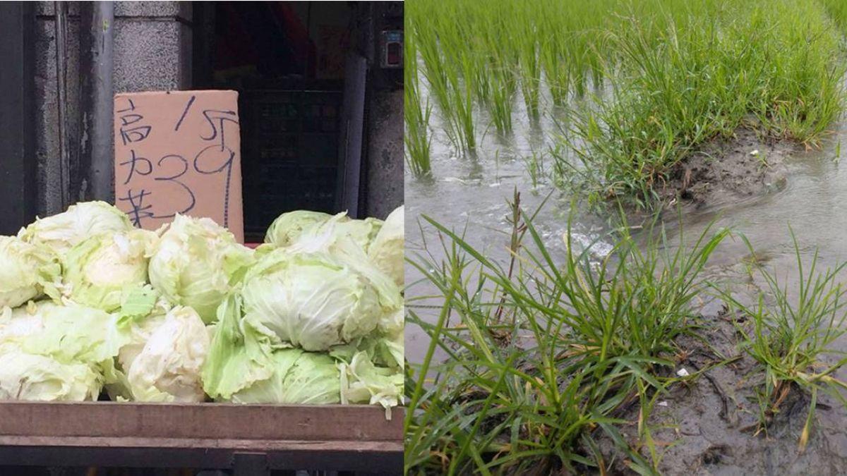 豪雨達標就賠  130件農業天災險賠3千餘萬