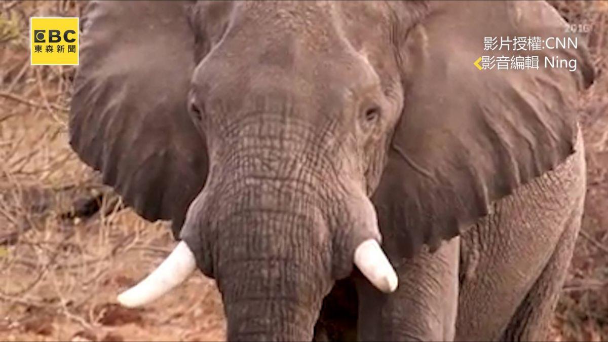 砍斷頭骨!87頭象屍橫遍野 非洲史上最慘「獵殺奪牙」曝光