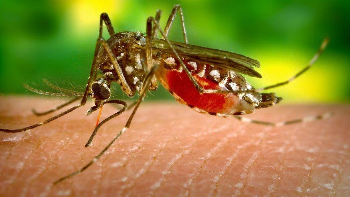 蚊子咬一口險死!24歲男長12公分大膿包 醫院發病危通知