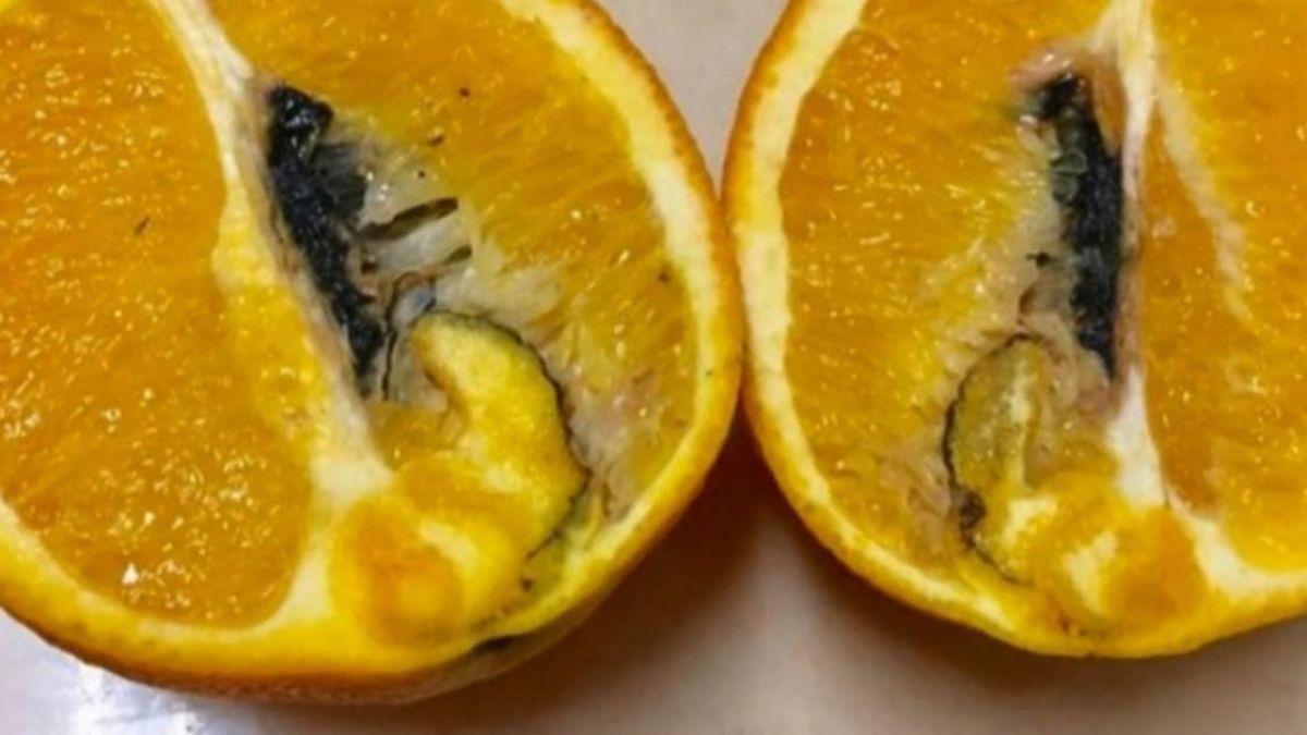 賣場澳洲甜橙傳黑腐病 購買人潮不減