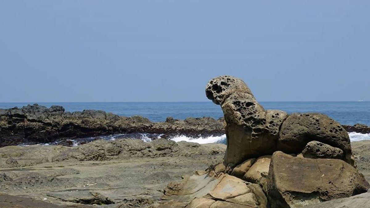 基隆八斗子驚見海豹?暴紅岩石接棒女王頭成觀光新亮點