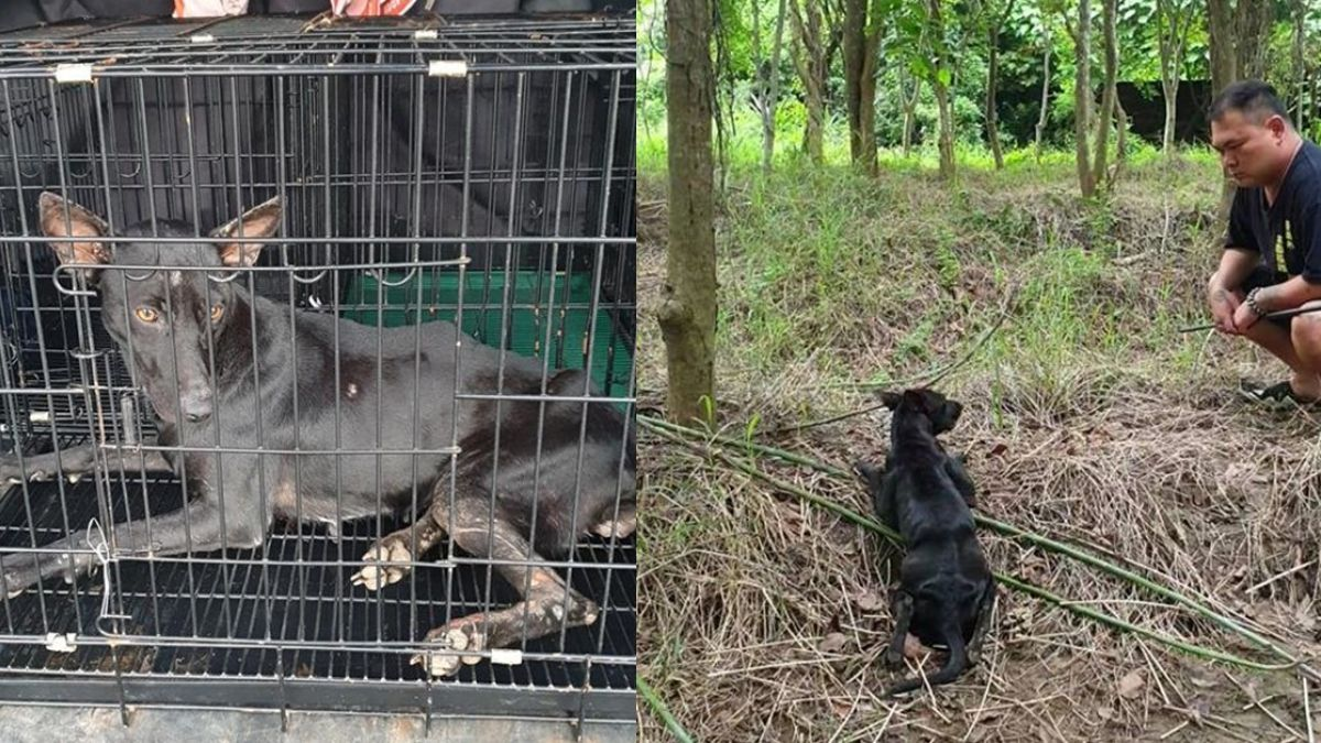 「帶你回去!」小黑狗拖癱腿躲樹林 他用一個月獲信任