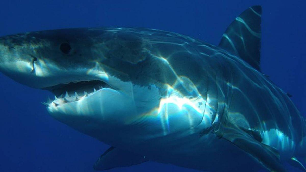 大堡礁驚傳鯊魚攻擊事件 澳洲擊斃2巨鯊