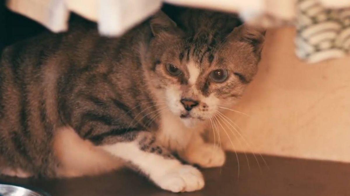 品種犬貓遭棄活不過1星期!年輕夫妻:牠們不會搶食、躲車子