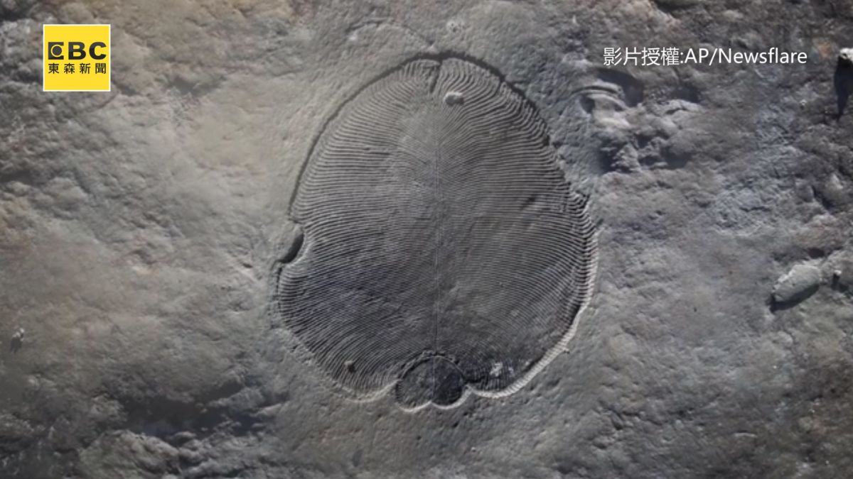 震驚!5.58億年前化石出土  「脂肪」證明為動物始祖