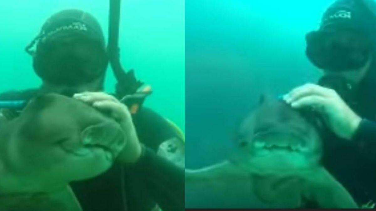 超親密7年友情! 小虎鯊見潛水員…興奮撲向前「撒嬌討摸摸」