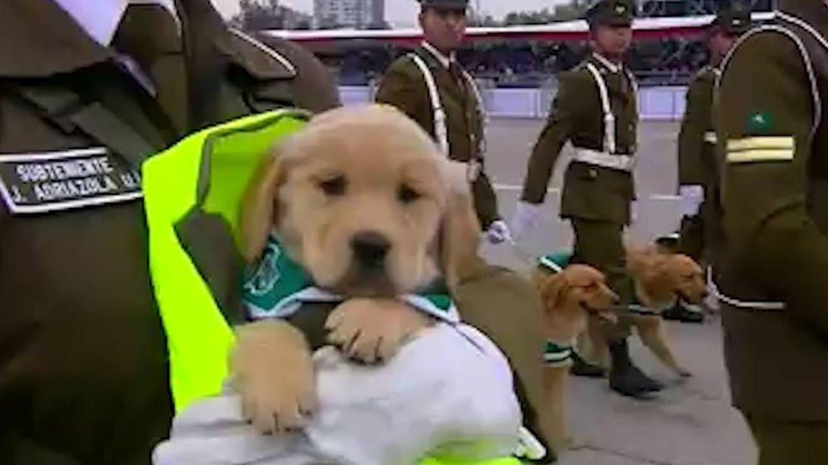 智利女兵抱幼犬參加閱兵式 反差萌畫面網暴動:國家棟樑我可以!
