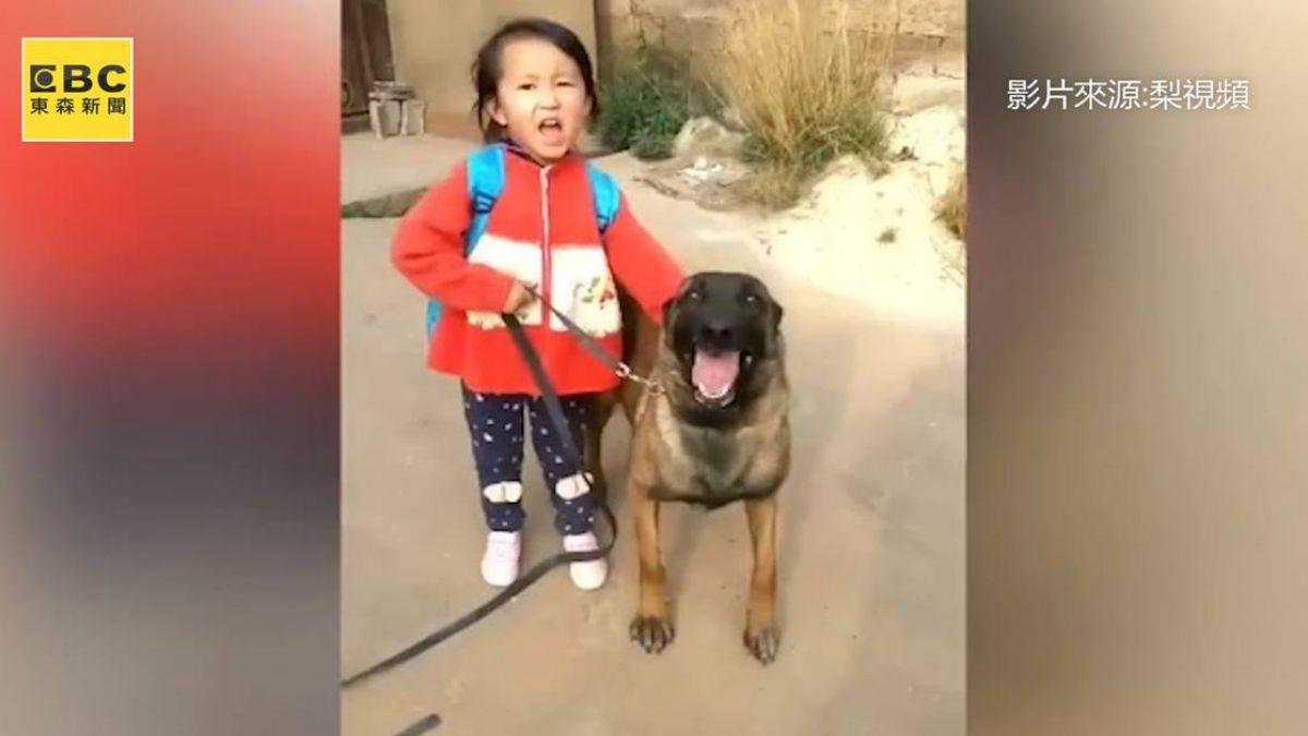 超萌保鑣!訓練明星犬陪愛女上學 27萬「挖角」堅決不賣