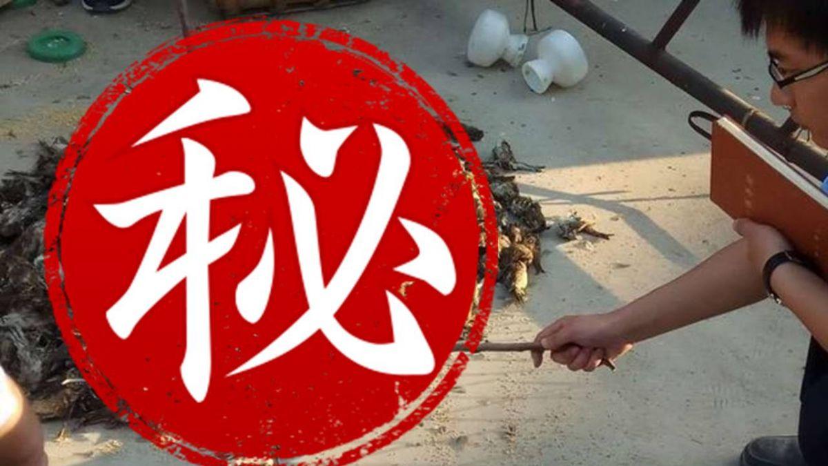 沒鳥能活著飛出天津!12萬隻候鳥遭囚 「催肥」成野味