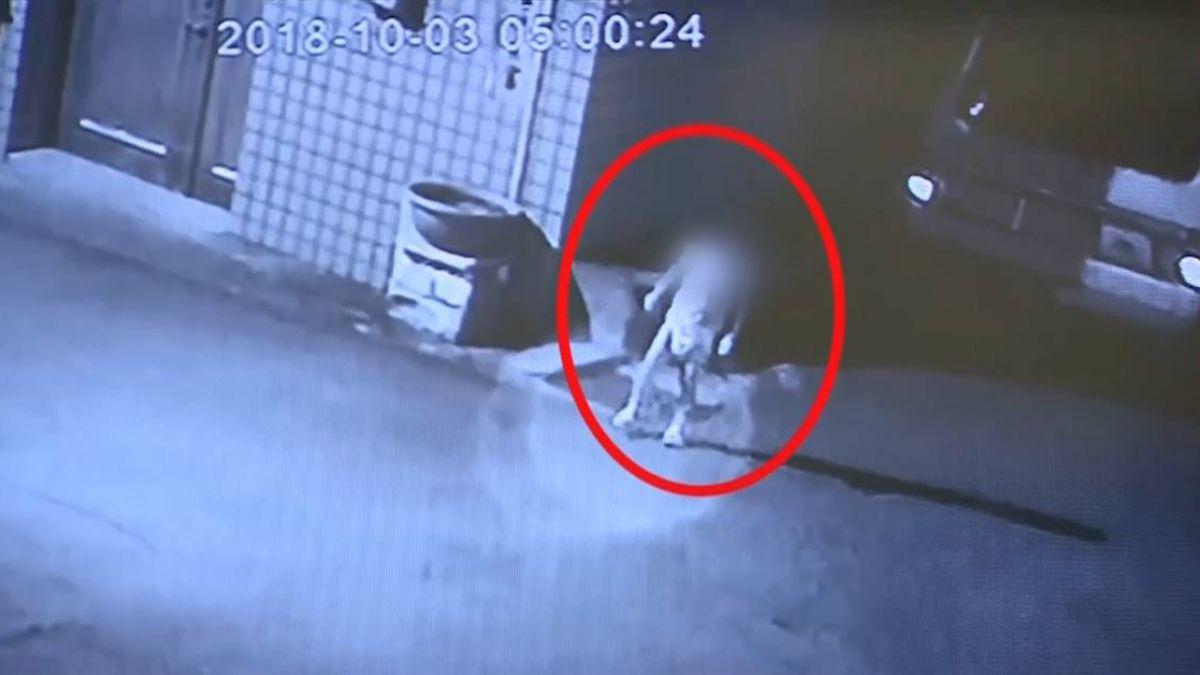 不是第1次!4歲女童深夜遭丟包 街頭慌張找媽媽