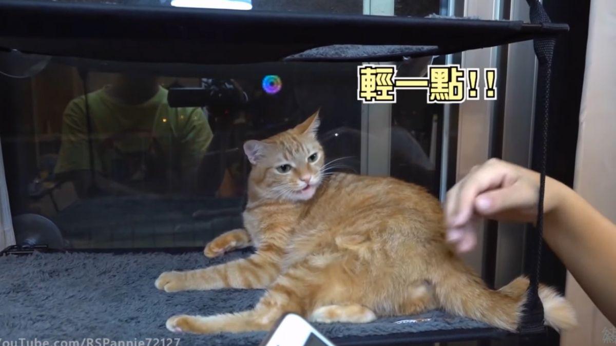 網紅測4喵「擼貓制霸」等級! 沒節操老么摸哪都狂呼嚕
