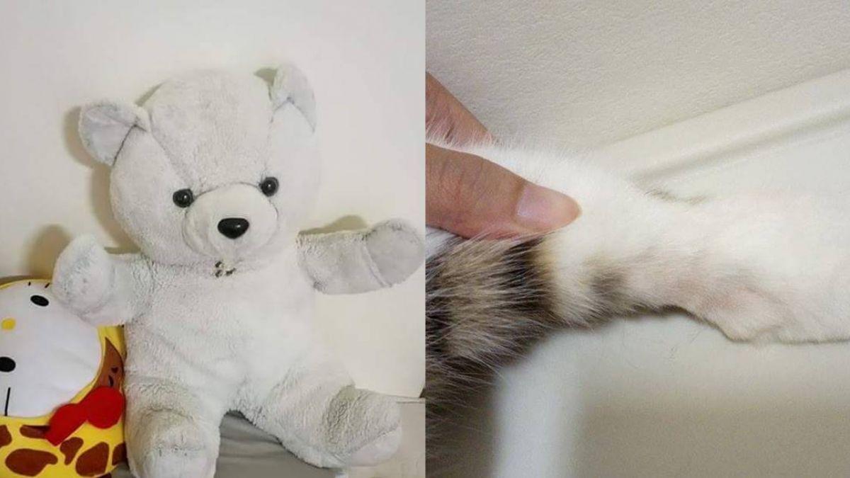 真實安娜貝爾!熊娃娃瞬移猛盯…家貓離奇嘶吼 網驚見「外靈」