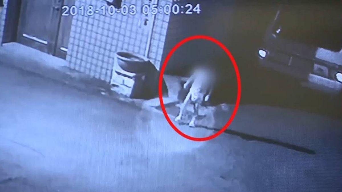 不是第1次!4歲女童深夜遭丟包 街頭慌張找媽媽   社會局說話了