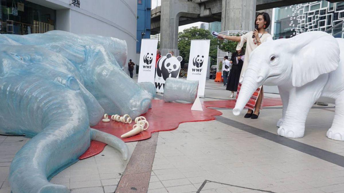 曼谷大象藝術展 泰國籲觀光客拒購象牙