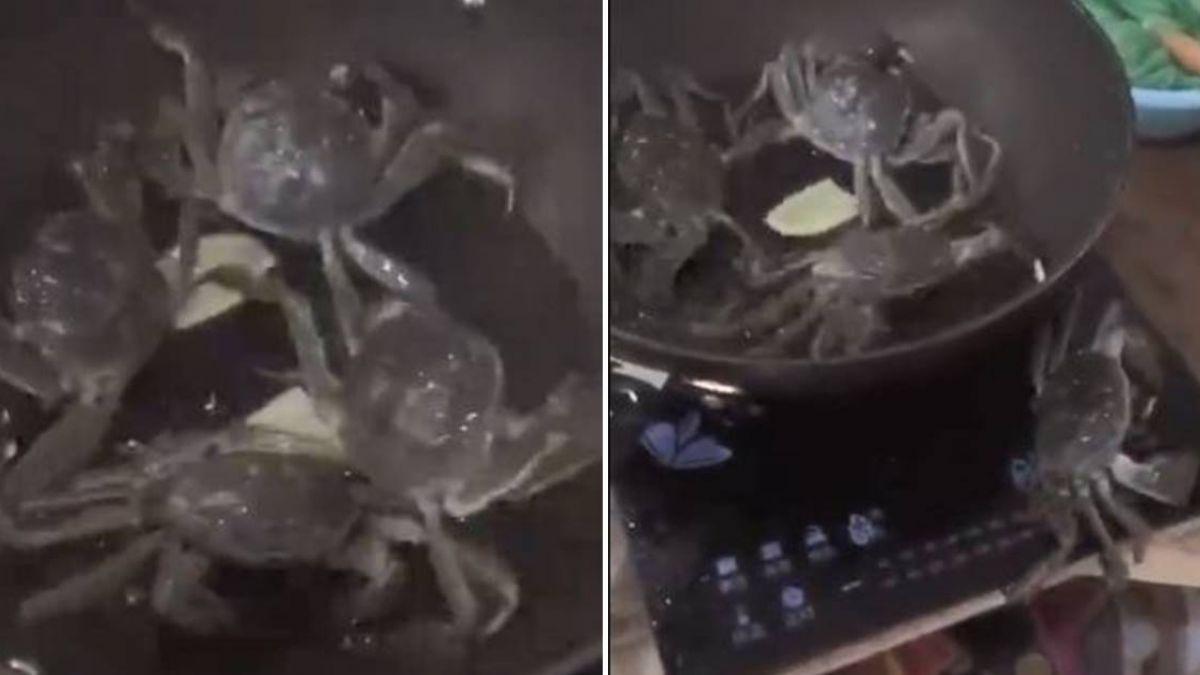 【影片】給力!螃蟹哥逃出熱鍋「關火救同伴」網看傻:這有靈性母湯吃