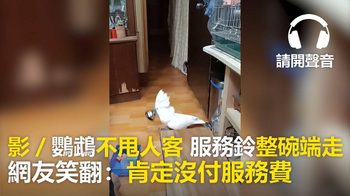 【影片】鸚鵡不甩人客 服務鈴「整碗端走」網友笑翻:肯定沒付服務費
