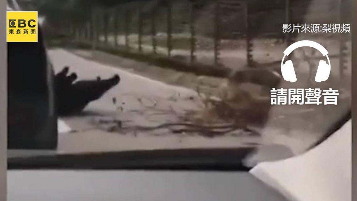 【影片】工讀生出來!見「特斯拉」秒摔倒 黑熊超萌碰瓷…網笑翻:很識貨