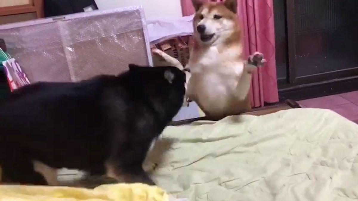 【影片】給我滾!把妹失敗反遭怒吼 赤柴嚇到彈開「舉雙手投降」