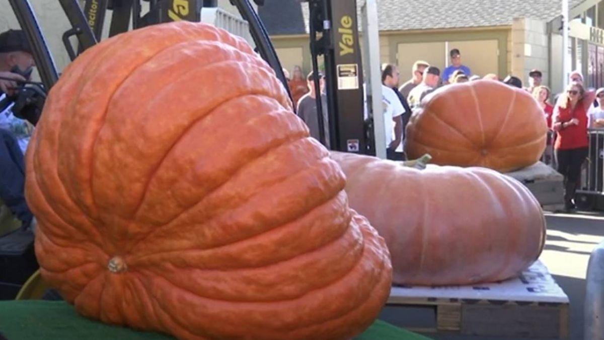 984公斤超大南瓜 稱霸北加州世界南瓜大賽
