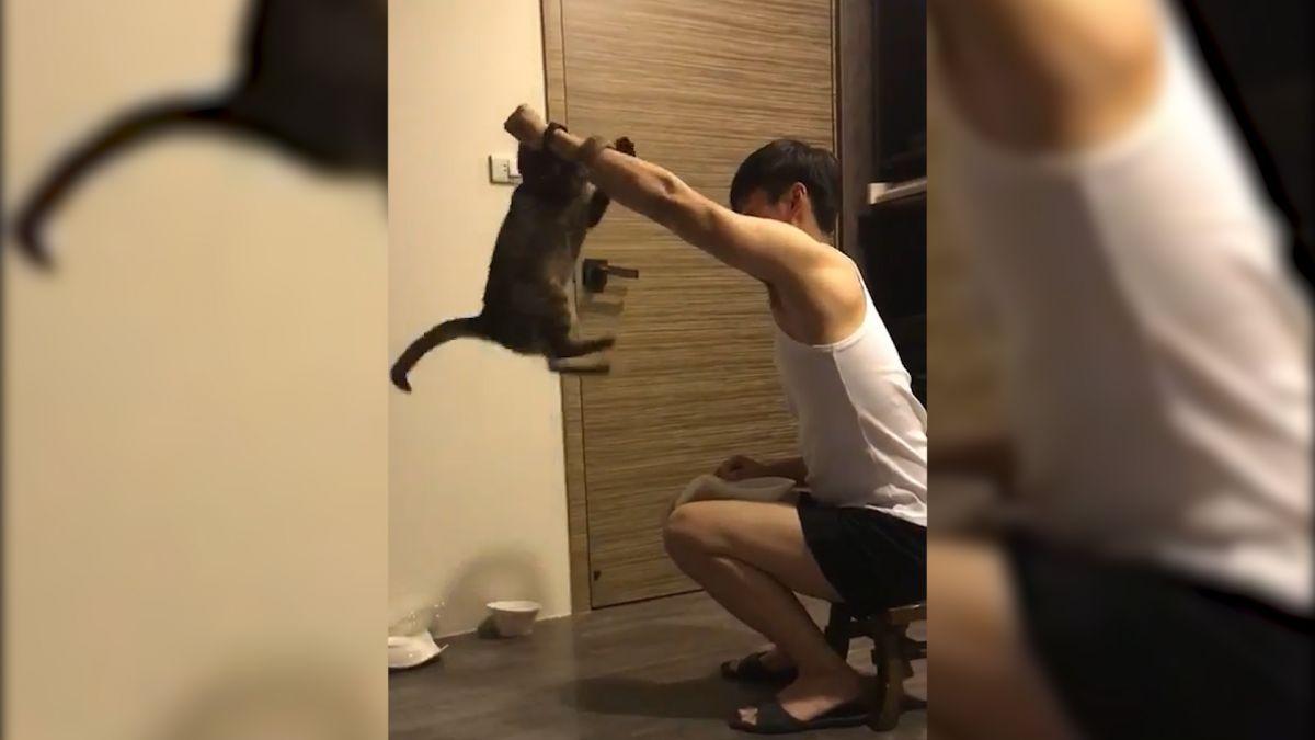 【影片】狗魂喵?握手.擊掌.跳圈圈難不倒 網友「別人的貓從不讓我失望」