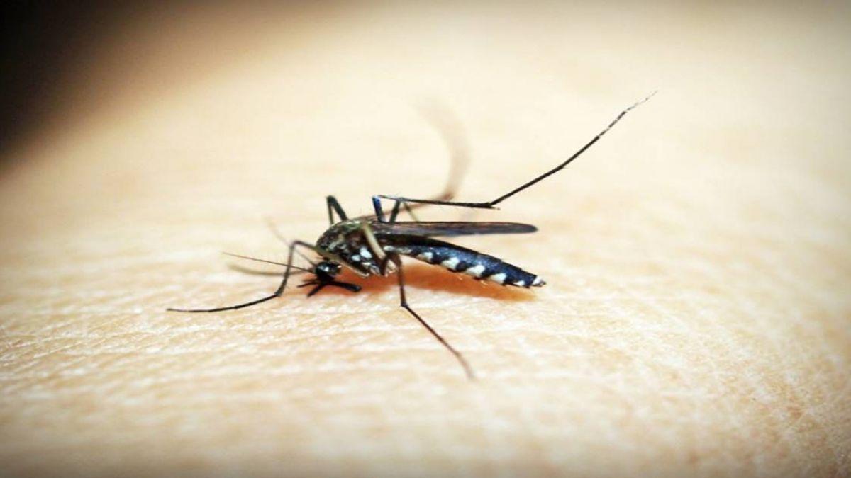 抗瘧藥沒規律吃 2女大生去非洲服務染瘧疾