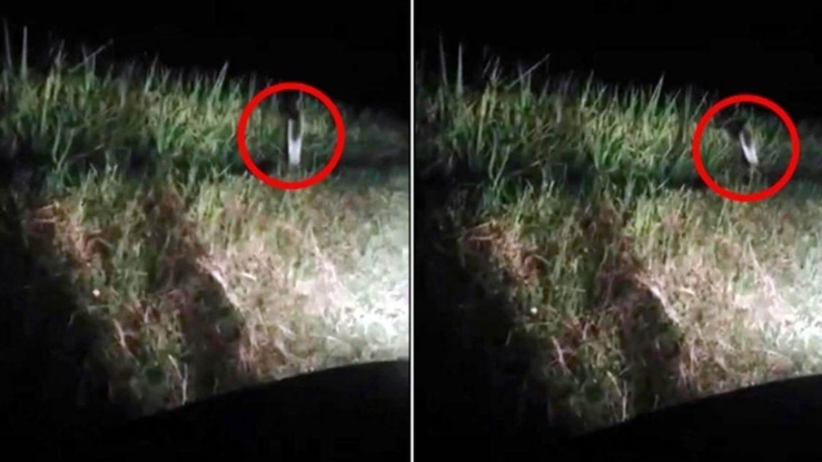 【超恐怖片】鄉間驚見跳躍身形 上百萬網嚇壞看到「叢林幽靈」